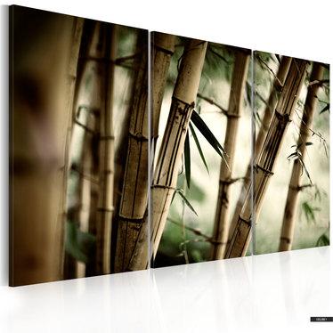 Wandbild TROPISCHER WALD120x80 cm