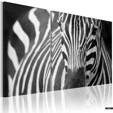 Wandbild LADY ZEBRA 3-teilig 60x40 cm