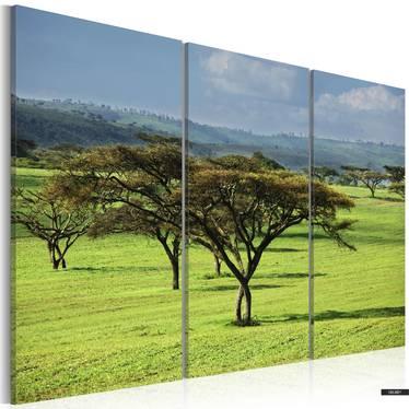 Wandbild AFRIKANISCHE AKAZIEN 120x80 cm
