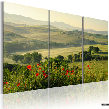 Bild MOHN IN DER TOSKANA 120x80 cm