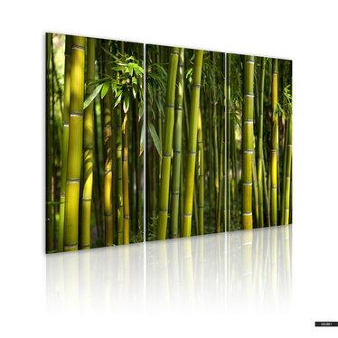 Wandbild BAMBUS 120x80 cm